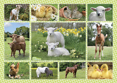 On The Farm Multipic Poster by Greg Cuddiford