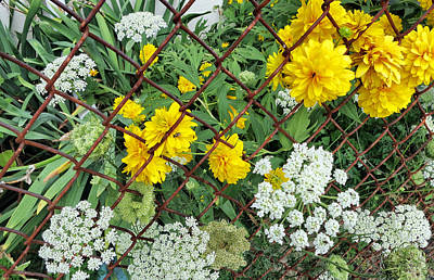 On The Rusty Fence - Flowers Poster