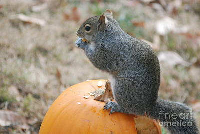 Poster featuring the photograph On Top Of The Pumpkin by Mark McReynolds