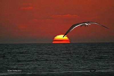 One Black Skimmers At Sunset Poster by Tom Janca