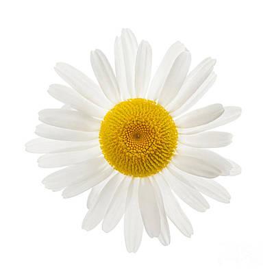One Daisy Flower Poster by Elena Elisseeva
