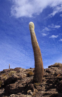 One Enormous Cactus Poster by Lana Enderle
