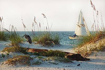 One Legged Heron And Sailboat Poster by Michael Thomas