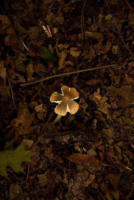 Poster featuring the photograph One Little Mushroom by Lena Wilhite