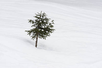 One Little Tree In The Snow In Winter Poster