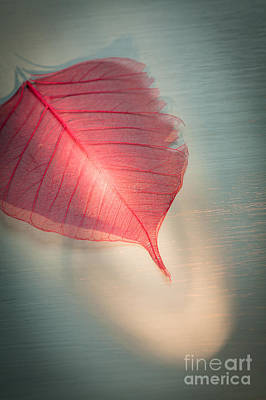 One Red Leaf Poster