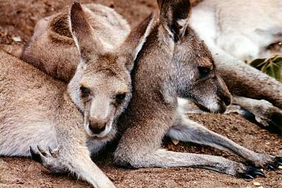 One Roo Two Roo Poster