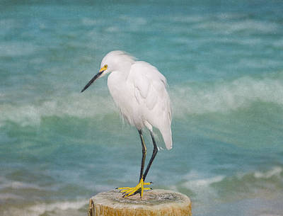 One With Nature - Snowy Egret Poster