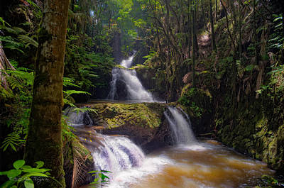 Poster featuring the photograph Onomea Falls by Jim Thompson
