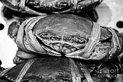 Ooh Crab - Black And White Version Poster by Dean Harte