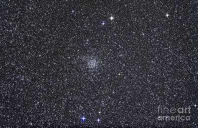 Open Cluster Ngc 7789 Poster by Alan Dyer