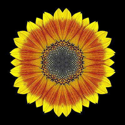 Orange And Yellow Sunflower Flower Mandala Poster