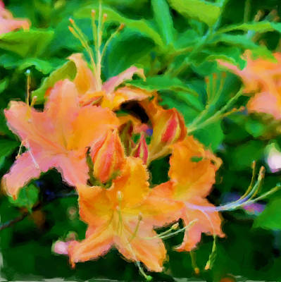 Orange Azaleas Poster by Joann Vitali