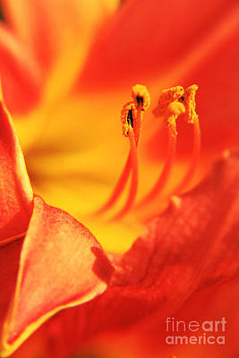 Orange Blooming Poster