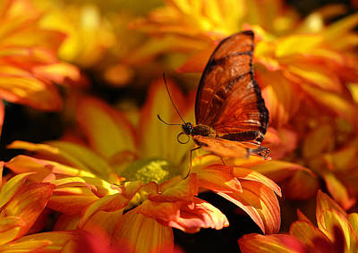 Orange Butterfly On Yellow Flowers Poster