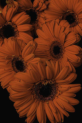 Orange Daisy Bouquet Poster by Garry Gay