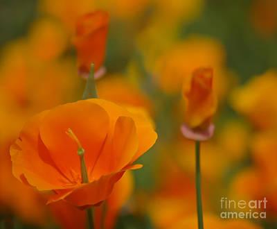 Orange Delight Poster by Nick  Boren