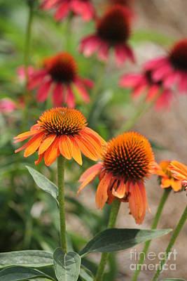 Orange Echinacea Poster by Theresa Willingham