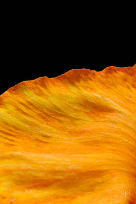 Orange Edge Poster by Geri Glavis
