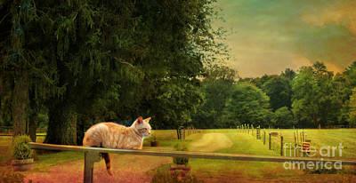 Orange Farm Cat Poster