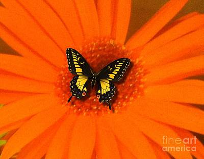 Orange Flower And A Butterfly By Saribelle Rodriguez Poster by Saribelle Rodriguez