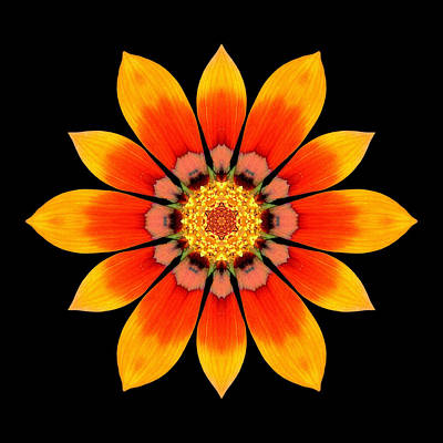 Orange Gazania I Flower Mandala Poster