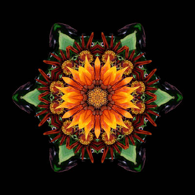 Orange Gazania IIi Flower Mandala Poster