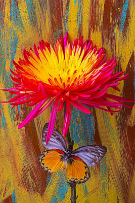 Orange Gray Butterfly On Mum Poster by Garry Gay
