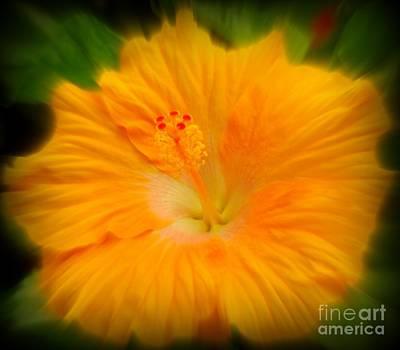 Orange Hibiscus Flower Poster by Clare Bevan