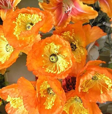 Orange Joy Poster