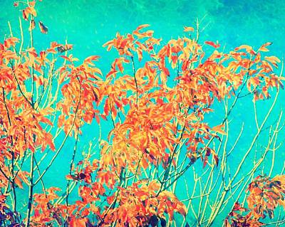 Orange Leaves And Turquoise Sky  Poster