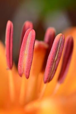 Orange Lilly Flower Poster