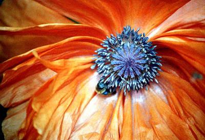 Orange Poppy Close-up Poster