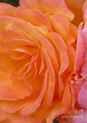 Orange Rose Swirl Poster