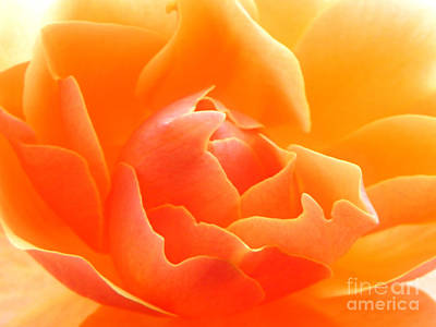 Orange Sherbet Poster by Deb Halloran