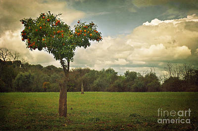 Orange-tree Landscape Poster by Carlos Caetano