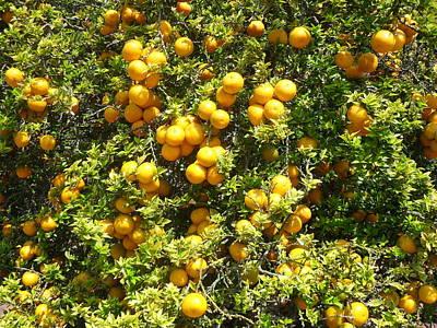 Orange Trees Poster