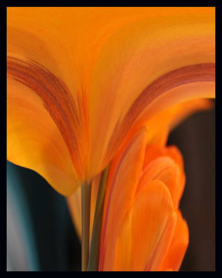 Poster featuring the photograph Orange Tulip Tower by Jim Baker