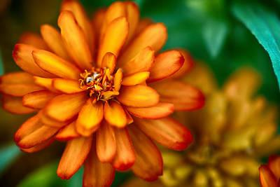 Orange You Glad You're A Flower Poster
