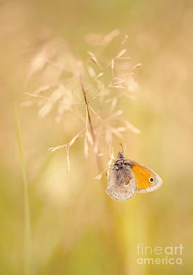 Orangle Butterfly Sitting On A Dry Grass Poster