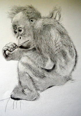 Orangutan Baby Poster by Rosanna Maria