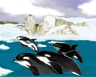 Orcas Poster