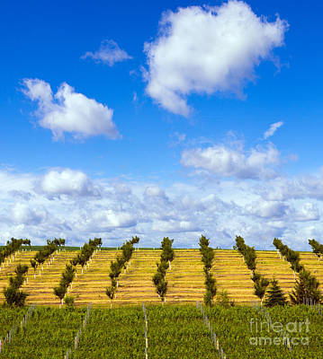 Orchard And Winery In Northern Michigan Poster by Twenty Two North Photography