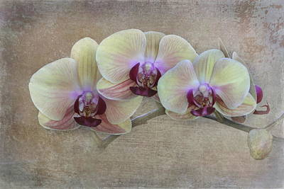 Orchid Poster by Angie Vogel