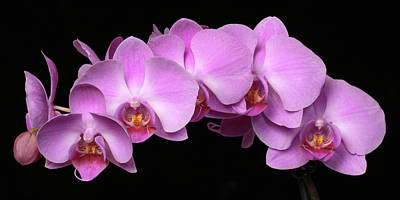 Orchid Arch Poster