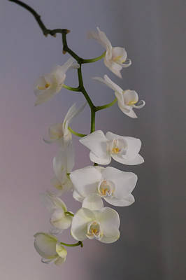 Orchid Cascade Poster
