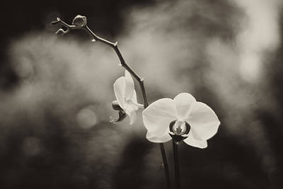 Orchid Fine Art Poster by Stephanie McDowell