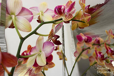 Orchid Flowers Poster by Augusta Stylianou