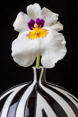 Orchid In Striped Vase Poster