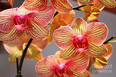 Poster featuring the photograph Orchid by Judy Palkimas